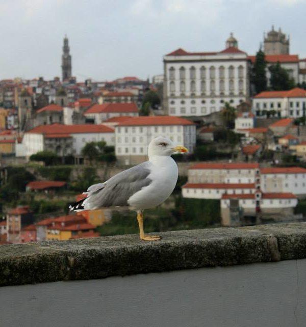 Three days in Porto, Portugal